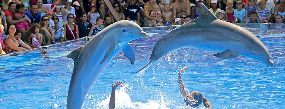 dofins-940x360