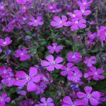El Jardín Botánico Marimurtra de Blanes, presente en la Semana de la Ciencia